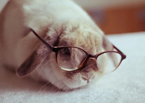 conejo lector
