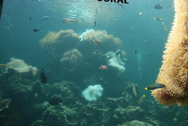 Tri Nguyen Aquarium, Nha Trang - Photo An Bui