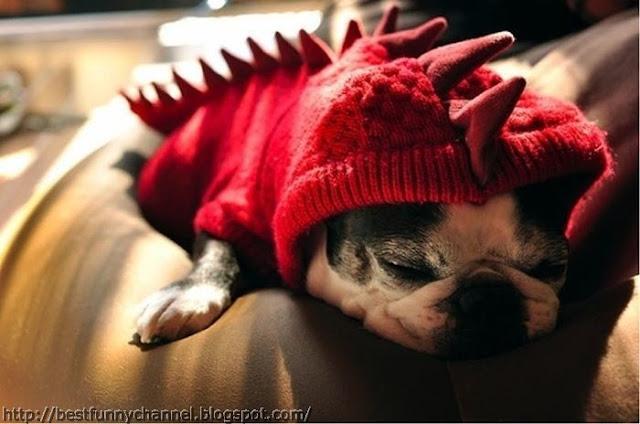 Funny dog dragon.