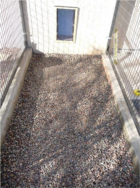Petsafe Kennels Com How To Build Your Own Dog Kennel Or