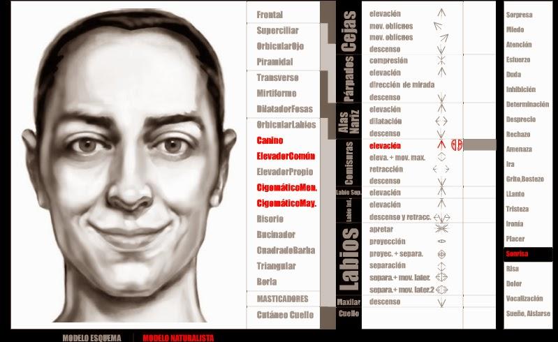 Mis primeras palabras: Anatomía de los músculos faciales