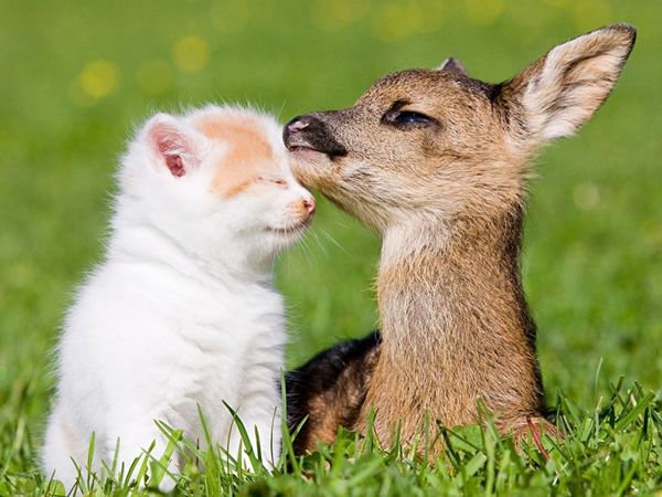 Imagem de um gatinho e um filhote de viado juntos