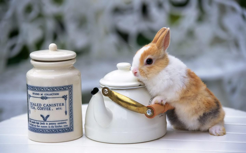 cute easter bunny desktop - photo #14