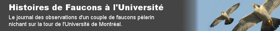 Histoires de Faucons à l'Université