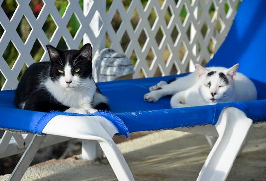 Sunbathing cats from Maho Beach St. Martin