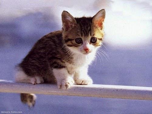 foto seso chat gratuite con foto
