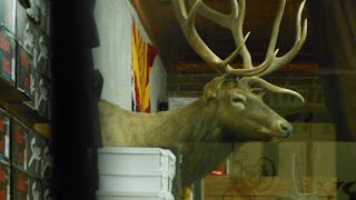 mounted deer head in store