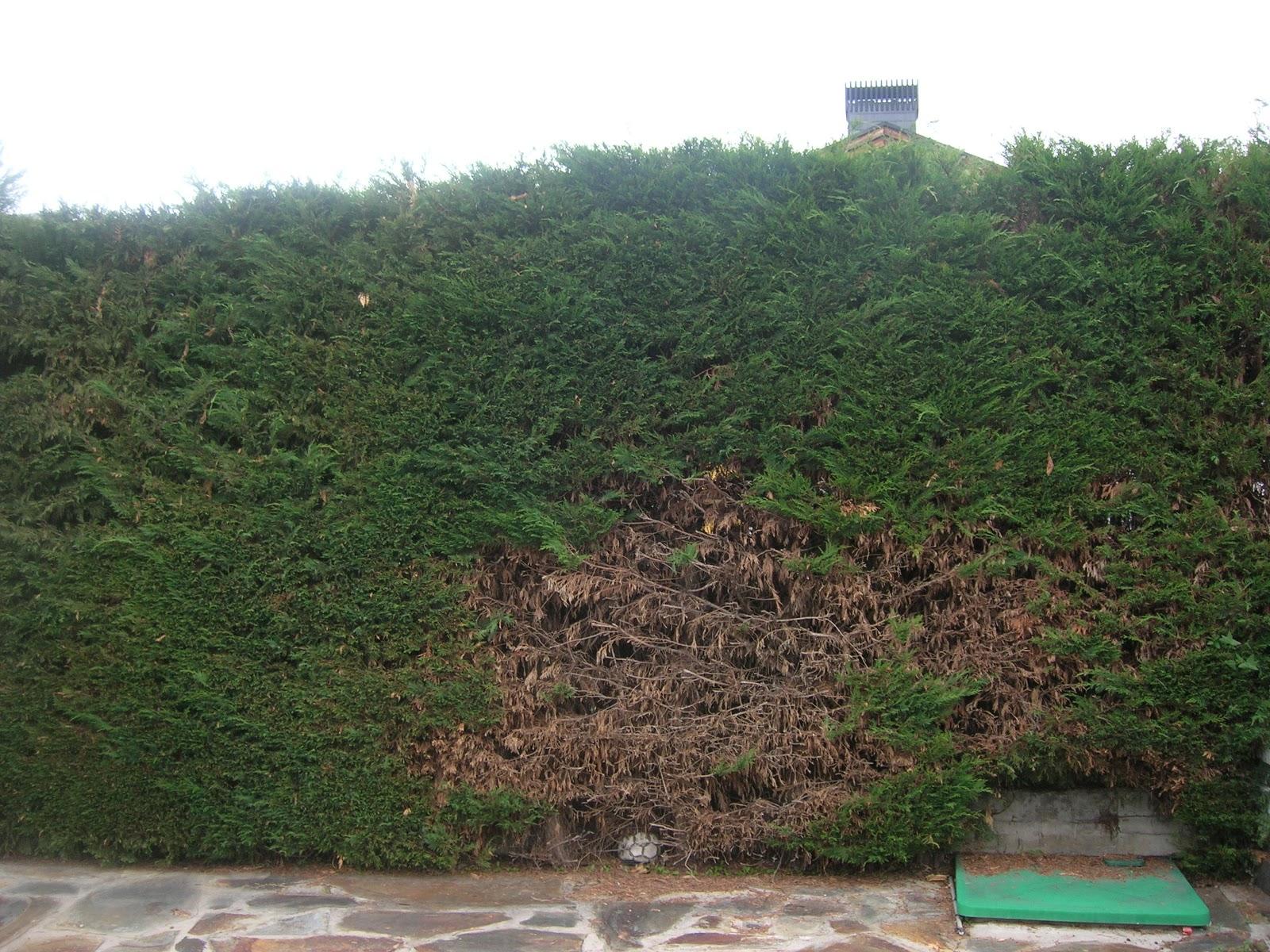 Los jardines de gaia problemas con los setos de con fera for Setos para jardin
