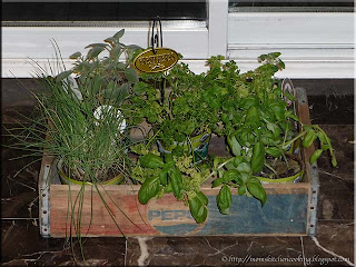 potted herbs in the kitchen