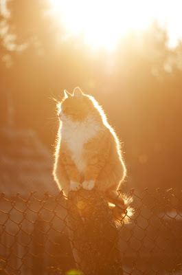 Orange and white cat in the sun