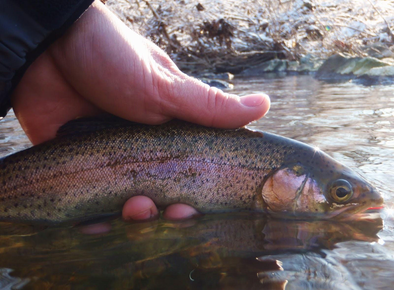 All things fly fishing winter time on the tully for Winter trout fishing