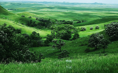 green land wallpaper