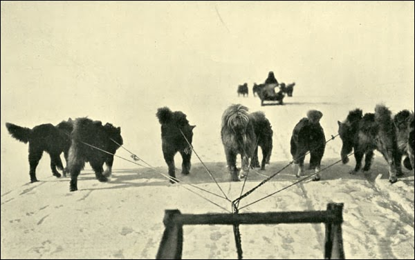 Captain Robert Abram Bartlett Dogsled in Siberia