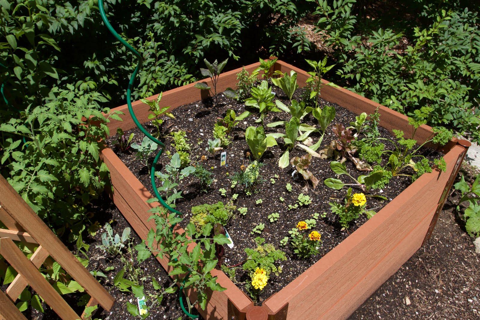 Freshly planted