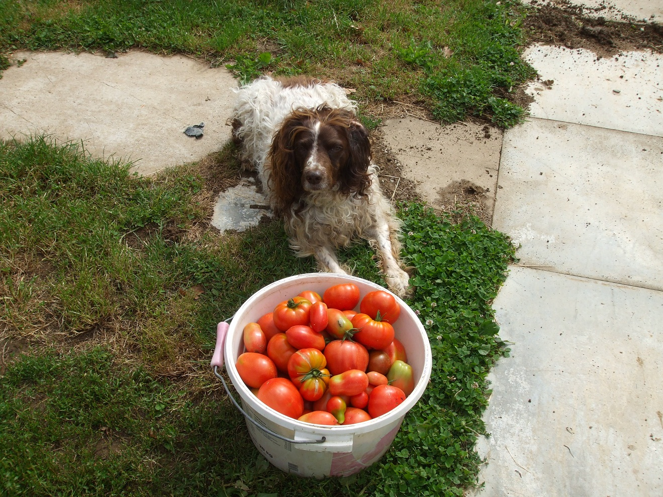 The Top Ten fruits and vegetables to add to your dog's diet