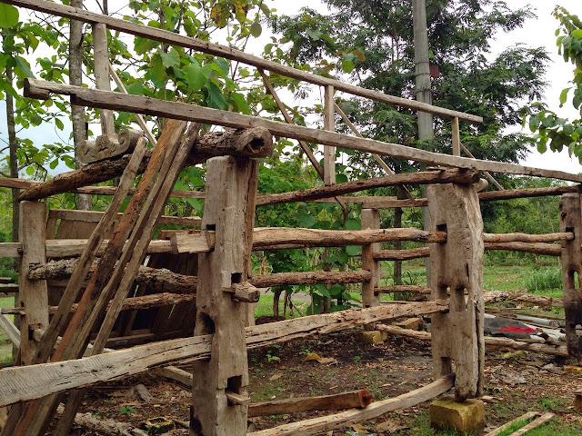 Dijual kandang sapi komplit dgn atapnya, siap pakai. Tebal tiang 43 dan 24 cm. Bahan kayu jati lawas. 08179442249 / pin bb 7D839780.