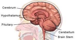 Deep brain stimulation stroke recovery photo 1