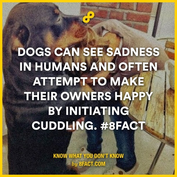 Dogs can see sadness in humans and often attempt to make their owners happy by initaiting
