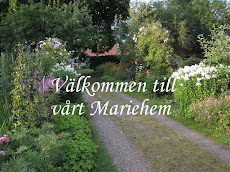 Vår trädgård - klicka och se en bildfilm från Mariehem