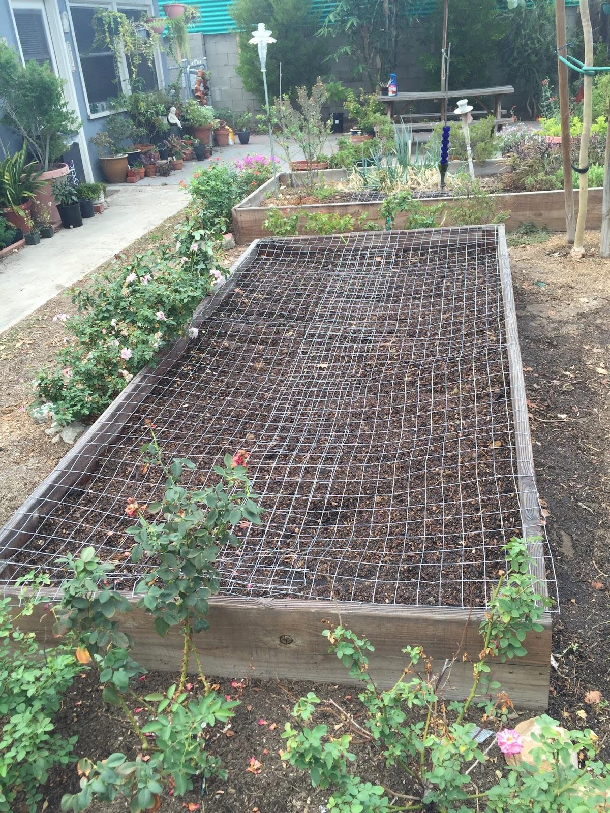 aprille u0027s socal gardening october 2015