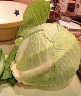 Gorgeous winter cabbage