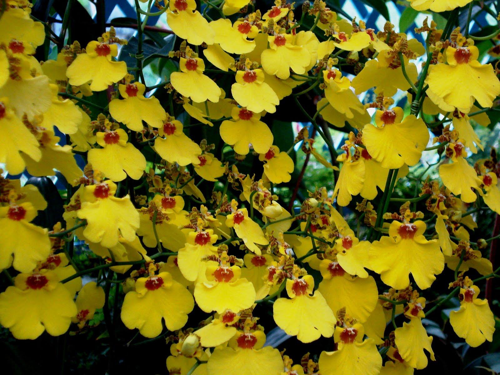 casar no jardim botanico : casar no jardim botanico:quarta-feira, 13 de abril de 2011