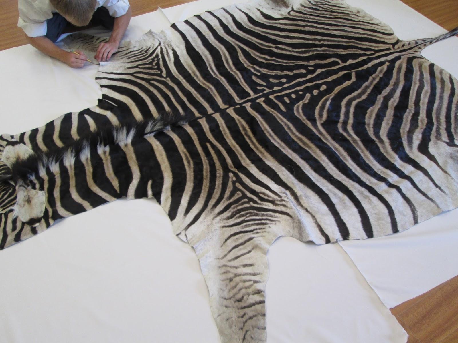 Zebra Hide Skin Cleaning And Repair In Los Angeles
