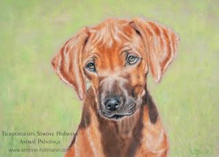 Tierportrait: Hundeportrait Rhodesian Ridgeback, mit Pastellkreide malen oder zeichnen lassen