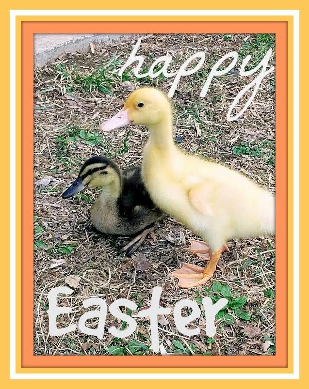 baby ducks www.diybeautify.com