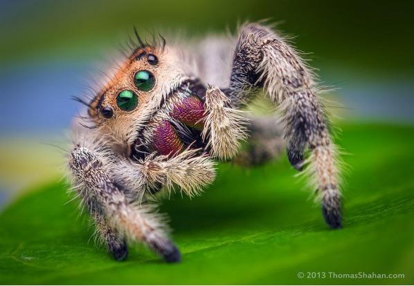 (random cute spider)