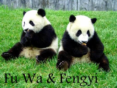 Panda Gergasi Kini Di Zoo Negara