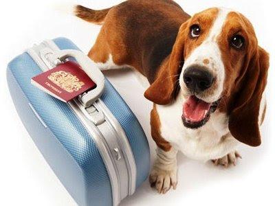 Viajando con tu Perro
