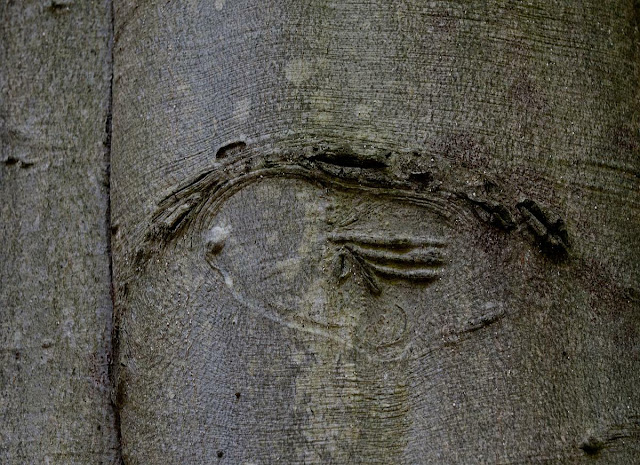 rather odd tree markings remind me of some sort of hieroglyphs, Grants Woods, Orillia