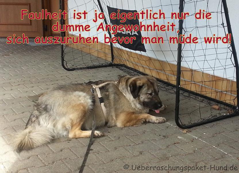 Hundebild mit Spruch