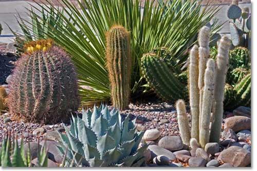 planning desert landscaping