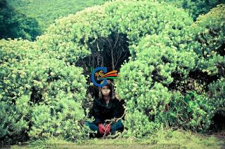 Padang Edelweiss Gunung Papandayan