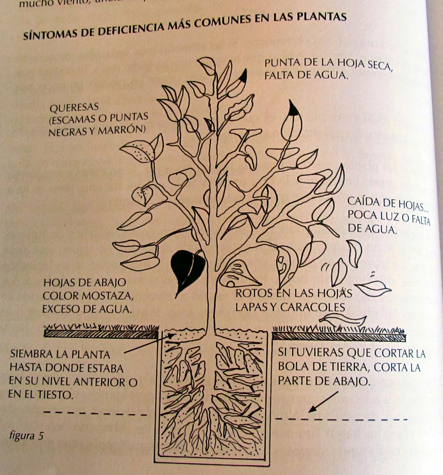 Foto blog puerto rico libro de jardiner a para todos - Libros sobre jardineria ...