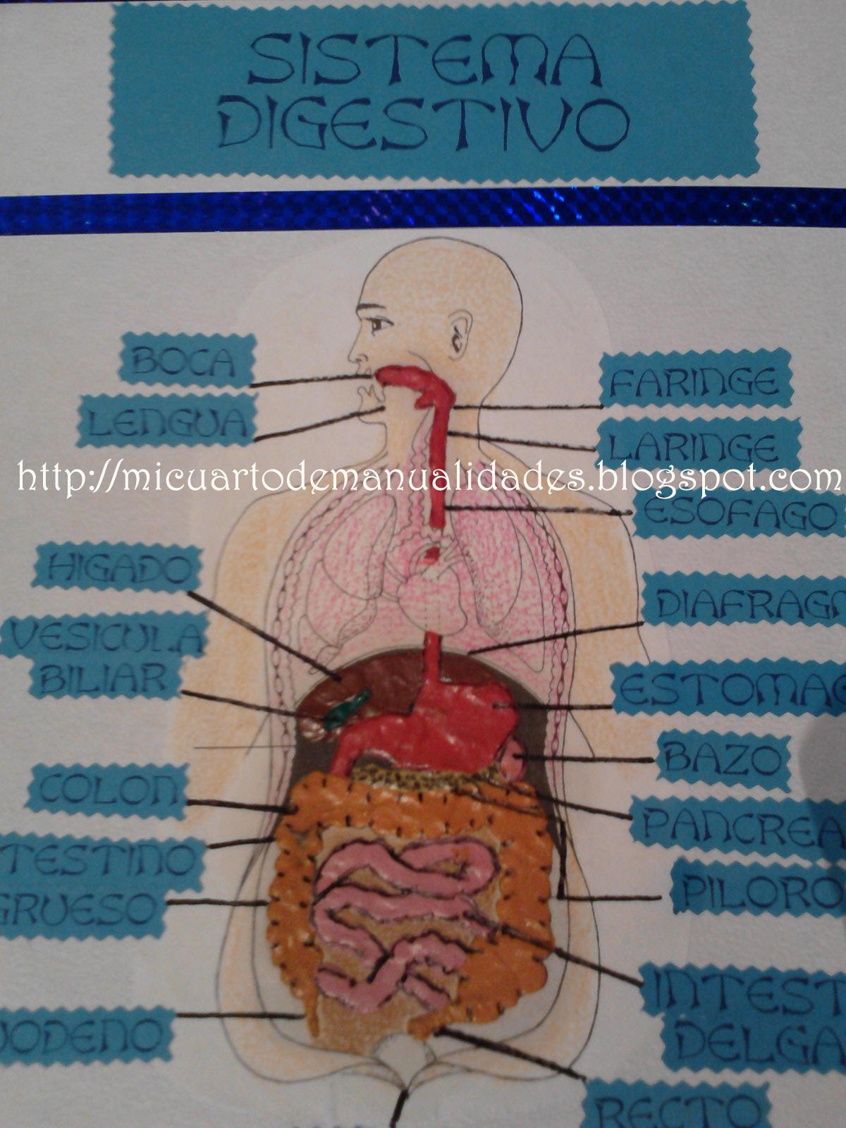 Mi cuarto de manualidades * Esther *: Sistema digestivo de plastilina