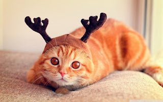 free hd images of reindeer cat for laptop
