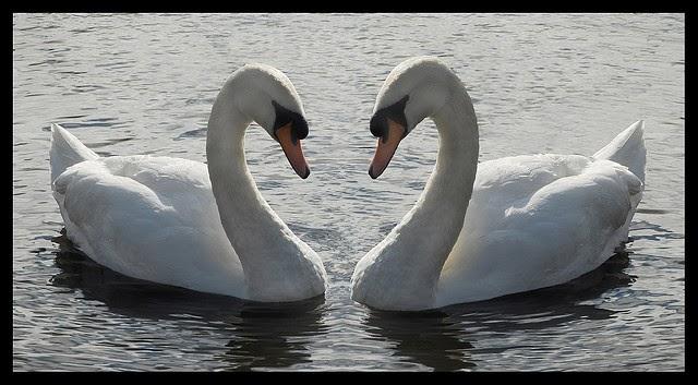 nature symmetry