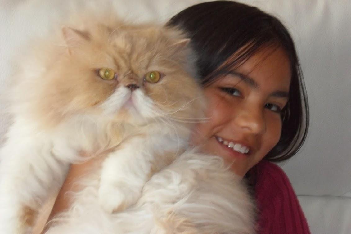 El blog del gato Hugo