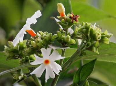 Benefits of Ornamental Plants for Health and the Environment