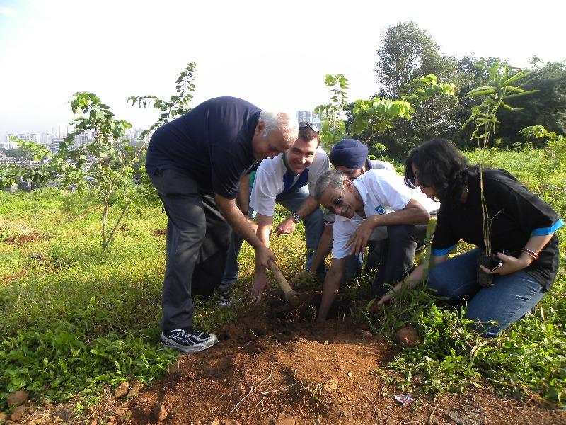 advantage of tree plantation of essay