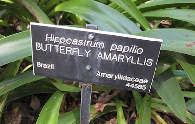 Lembaga Kode Internasional tata nama tumbuhan
