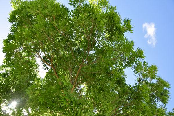 fagan park trees