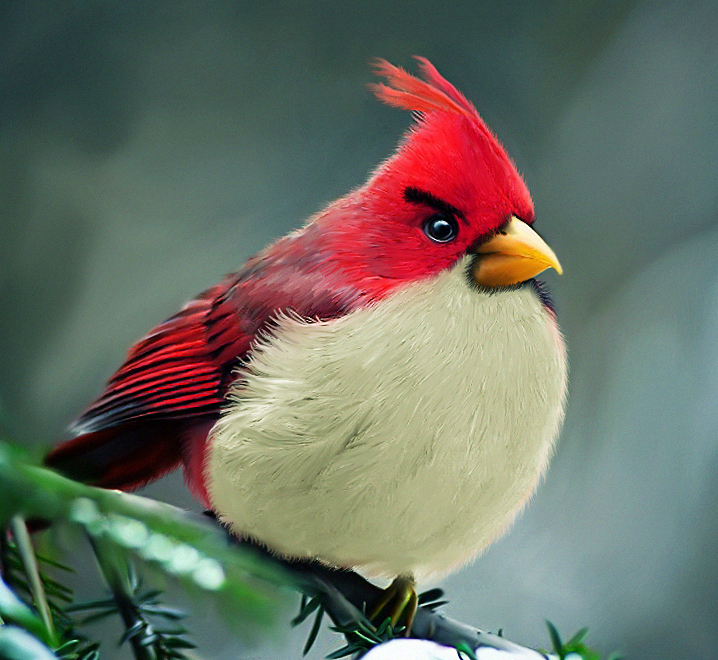 Gambar burung sebenar 'Angry bird'