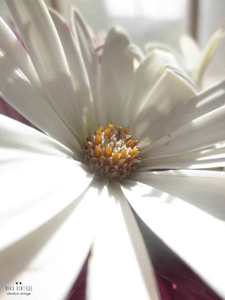 jardin, flores, plantar, jardineria, flores impresindibles, iris, margarita, lirio, hibisco, amarillis,lantana