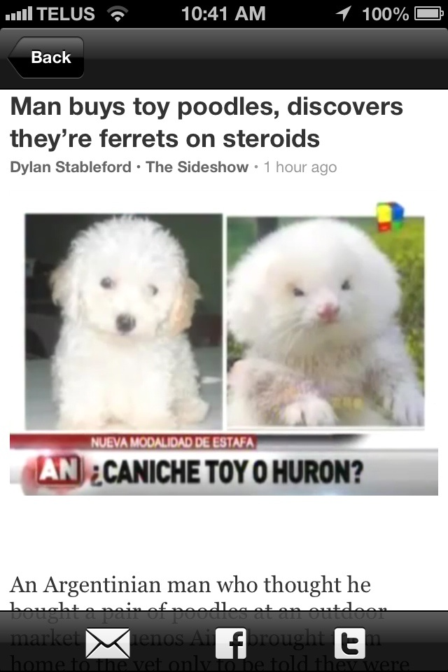 Man buys toy poodles, discovers they're ferrets on ...