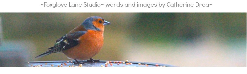 FOXGLOVE LANE STUDIO