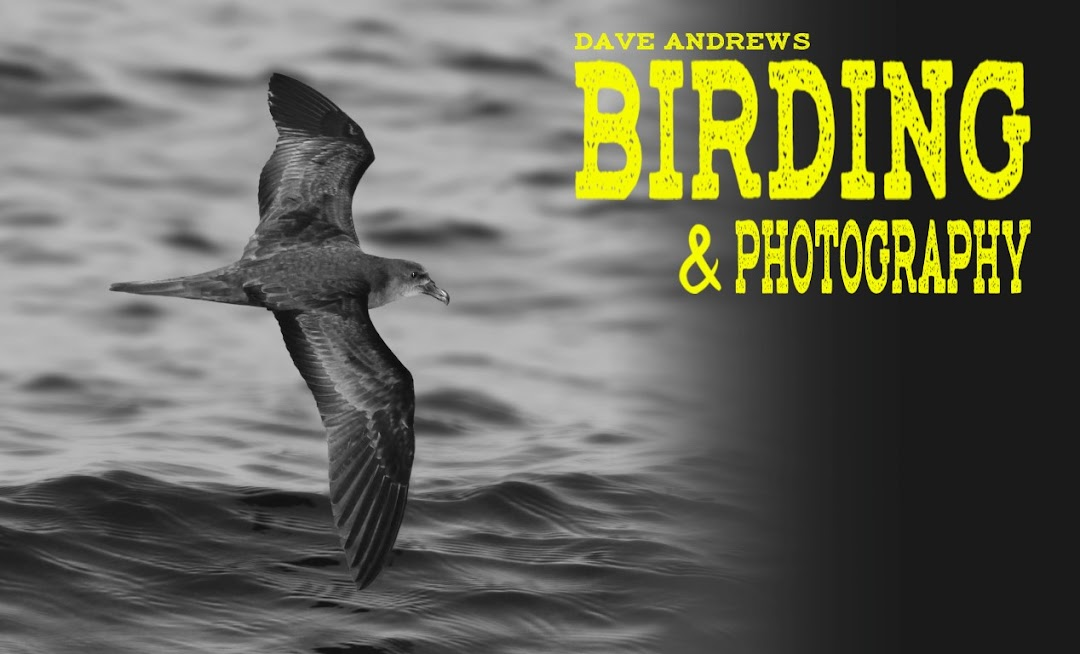 Dave's Birding and Photography